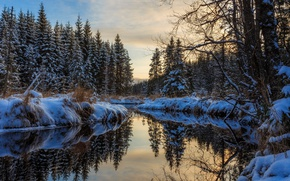 Обои зима, лес, вода, снег, деревья, отражение, речка