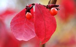 Картинка осень, листья, природа, ягоды, плод