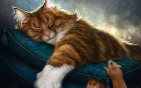 Обои кот, сон, рыжий, подушка, мыши