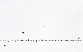 Обои небо, птицы, провод