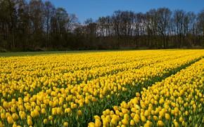 Картинка поле, деревья, пейзаж, цветы, Природа