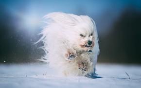 Обои друг, зима, собака