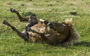 Картинка трава, лошадь, грива, копыта