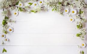 Обои ветки, цветы белые, декор, фон, лепестки, ромашки