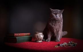 Обои кот, ткань, котэ, натюрморт, мордашка, бижутерия, вазочка, сосуд, выражение, серый, стол, красный, темный фон, кошка, ...