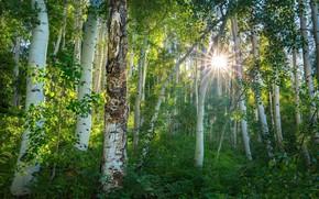 Обои природа, лес, солнце, весна