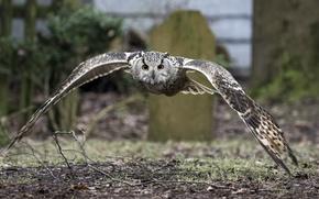 Картинка сова, птица, крылья, размах