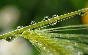 Картинка вода, капли, роса, Трава
