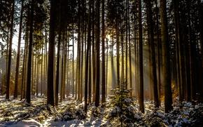 Картинка зима, лес, снег, деревья, солнечный свет