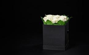 Картинка фон, коробка, розы, букет, rose, белые, box, romantic, Maxim Denisenko