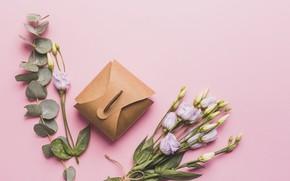 Картинка Цветы, Фон, Подарок, Эустома