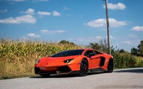 Картинка Lamborghini, Orange, Aventador, Cornfield