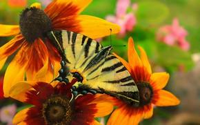 Картинка Макро, Цветы, Бабочка, Flowers, Macro, Butterfly