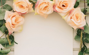 Картинка цветы, розы, лепестки, бутоны
