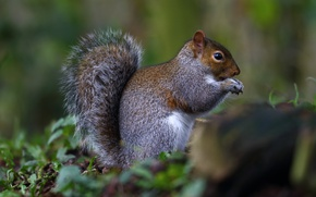 Картинка белка, animal, грызун, squirrel