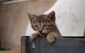 Картинка малыш, мордочка, котёнок, ящик