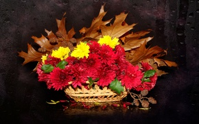 Картинка осень, цветы, красота, букет, хризантемы