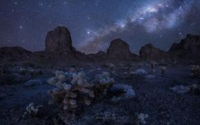 Обои звезды, скалы, небо, кактусы, ночь, пустыня, млечный путь, горы