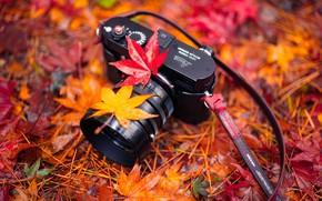 Обои природа, камера, листья, Harmony, Autumn