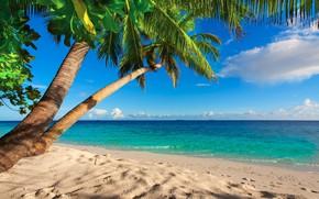 Картинка море, пляж, Тропики