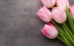 Картинка цветы, букет, тюльпаны, розовые, fresh, pink, flowers, beautiful, tulips, spring