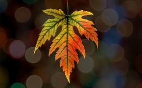 Обои блик, лист, осень, природа
