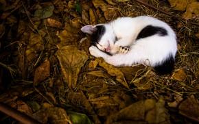 Картинка листья, котенок, спит
