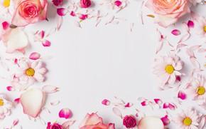 Картинка цветы, розы, ромашки, лепестки, розовые, rose, fresh, pink, flowers, petals, tender, frame
