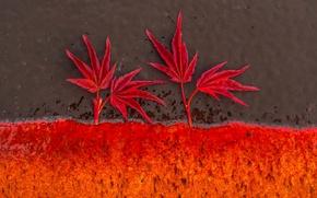 Картинка листья, фон, цвет