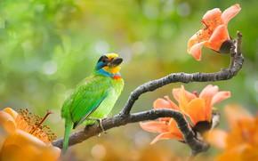 Картинка зелень, цветы, природа, фон, птица, ветка, боке