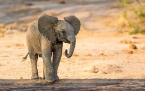 Картинка природа, слон, малыш