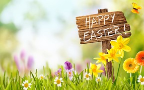 Картинка небо, трава, солнце, цветы, корзина, весна, Пасха, flowers, нарциссы, spring, Easter, eggs, decoration, Happy