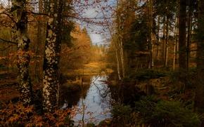 Картинка осень, лес, деревья, озеро, Германия, Germany, Bavaria, Hackensee