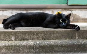 Картинка кот, отдых, черный, котейка