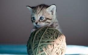 Картинка кошка, взгляд, свет, клубок, котенок, серый, фон, игра, шерсть, маленький, малыш, мордочка, котёнок, нитки, полосатый, …