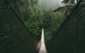Картинка лес, мост, природа
