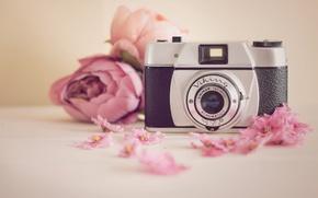 Обои Viking, камера, цветы