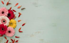 Картинка цветы, лепестки, герберы, бутоны, wood, petals, gerberas