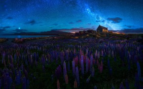 Картинка лето, небо, цветы, ночь, весна, Новая Зеландия, церковь, храм, млечный путь, люпины