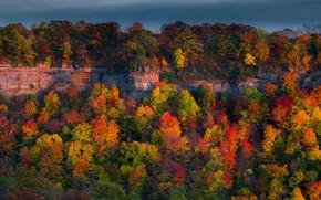 Картинка осень, лес, деревья, скалы, Канада, Онтарио