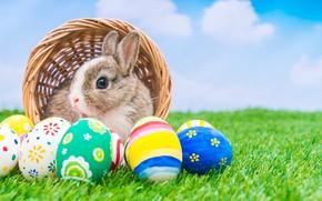 Картинка праздник, корзина, кролик, пасха, яйца крашенные