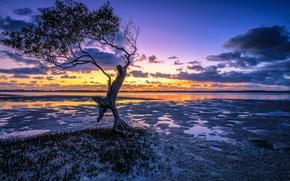 Картинка восход, дерево, рассвет, Австралия, Australia, Queensland, Квинсленд, Pumicestone Channel, Pumicestone Passage, мангра, канал Памисстоун