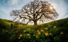 Картинка цветы, дерево, человек