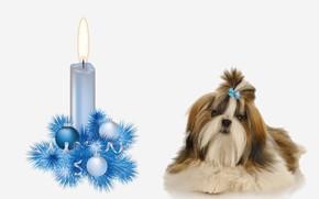 Картинка собака, украшение, свечa, прздник, год Собаки