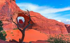 Картинка природа, дерево, скалы, арка, Юта, США, Долина Монументов