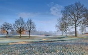 Картинка иней, поле, листья, деревья, golf course