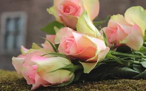 Картинка листья, цветы, крупный план, дом, фон, роза, мох, розы, букет, лепестки, окно, лежит, нежные, розовые, …