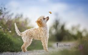 Картинка природа, бабочка, собака