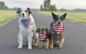Картинка собаки, друзья, дорога