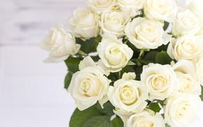 Обои букет, бутоны, Белые розы